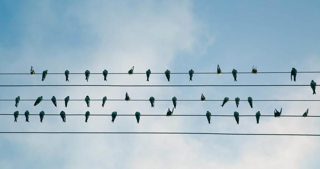 blog-anders-kijken-bijzondere-symmetrie-om-je-heen