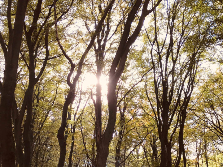 Bewust kijken: het palet van de herfst