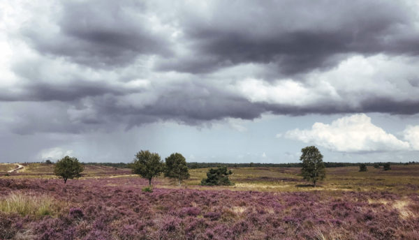Essencio - Blog - Bewust kijken - Heide wandeling verrassende heide in bloei