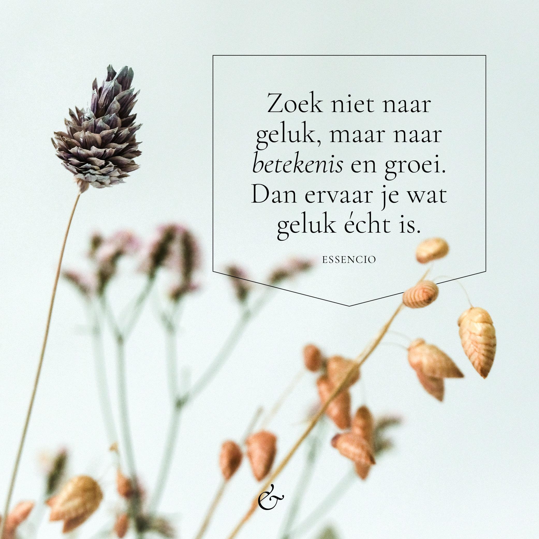 Essencio_Blog_Zoek niet naar geluk maar naar betekenis en groei - social media quote