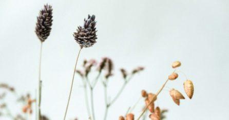 Essencio_Blog_Zoek niet naar geluk maar naar betekenis en groei