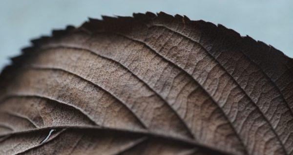 Essencio - Header blog Natuurlijke contrasten - Wat kun je leren van de seizoenen uit de natuur in je leven?