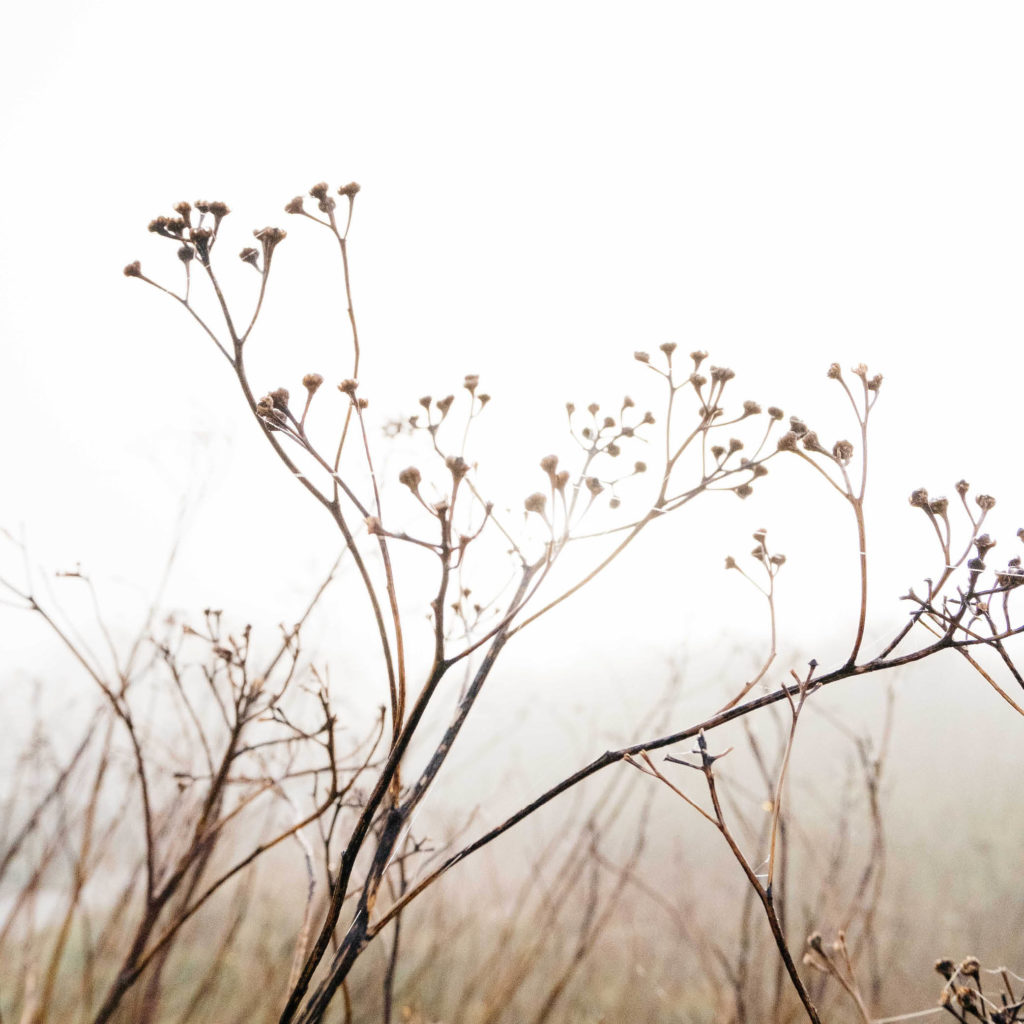 Essencio bewust kijken natuurfotografie inspiratie lente 2020 mist Margreet Kattouw 8