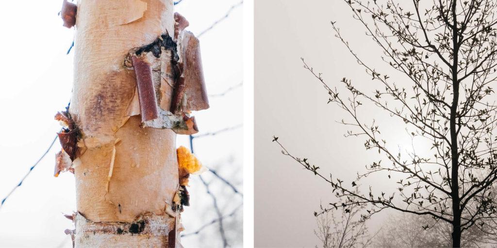 Essencio bewust kijken natuurfotografie inspiratie lente 2020 mist Margreet Kattouw 9