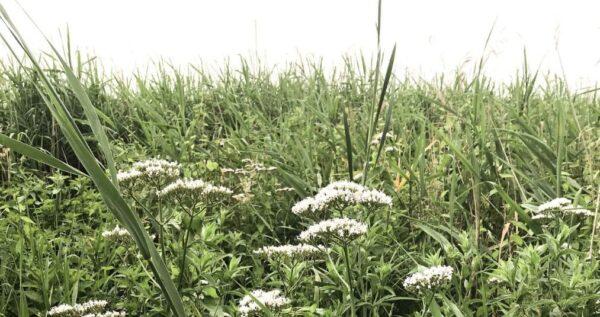 Essencio - Blog inspiratie - Tips voor meer groen en natuur om je heen in je tuin of op je balkon