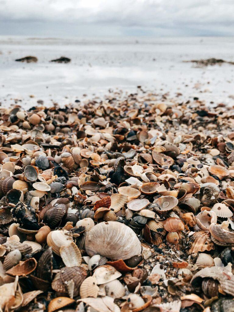 Essencio zee inspiratie schelpenlucht