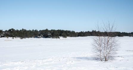 Essencio_BeeldBlog_Bewust genieten Magische witte winterweek