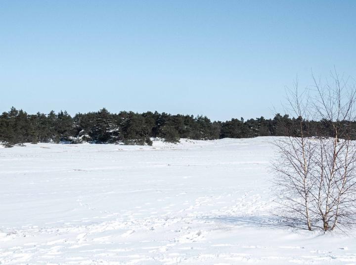 Bewust genieten: de magische, witte winterweek