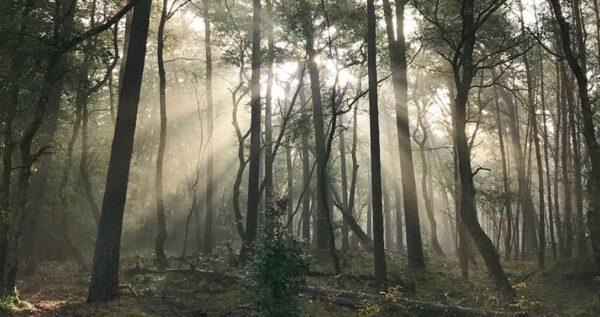 Essencio - onderzoek waarom wandelen altijd goed voor je is - mindwandering - bewust genieten aandachtig leven - kijk om je heen - maak een ommetje